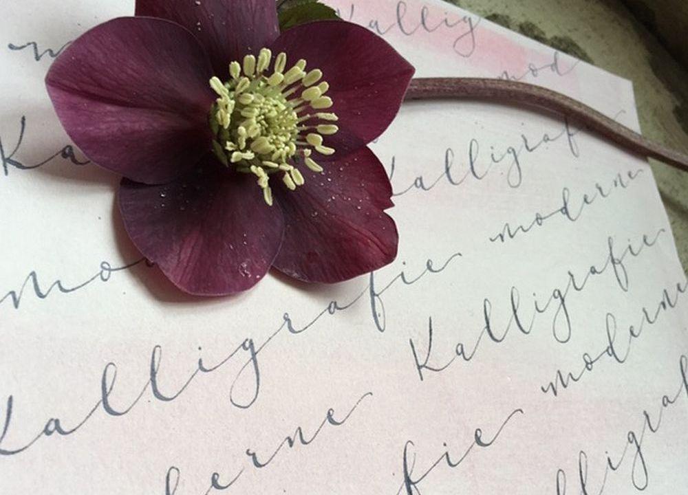 Moderne Kalligrafie, Handlettering Ute Schmidt: Schriftstück mit Blume für Workshops